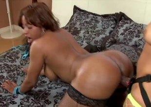 Big ass lesbians fucking hardcore with a thong overhead dildo